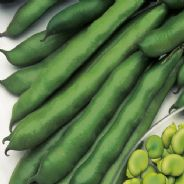 Broad Bean Imperial Green Longpod - 1kg - 25kg